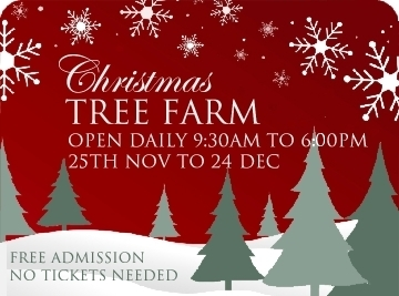 Christmas Trees chester and Ellesmere Port